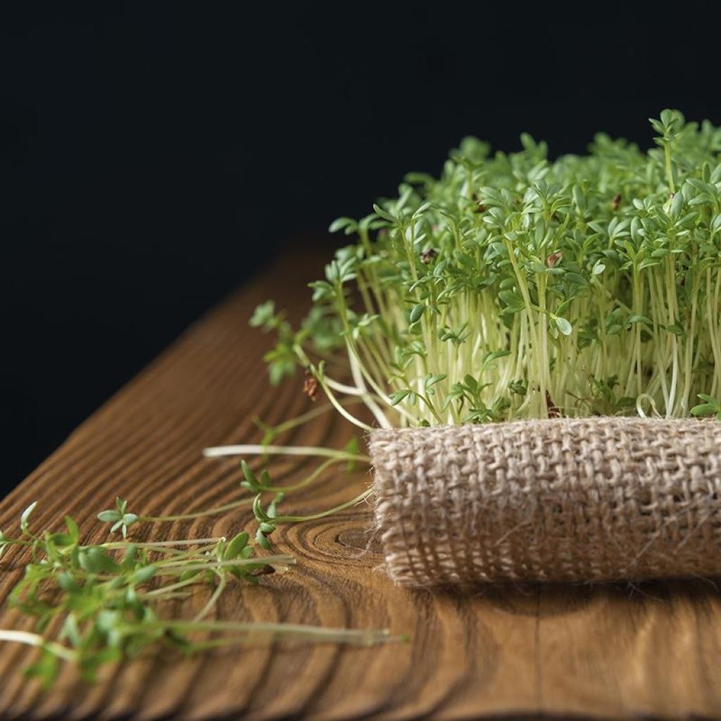 Мікрогрін кресс-салат 50г від OVO