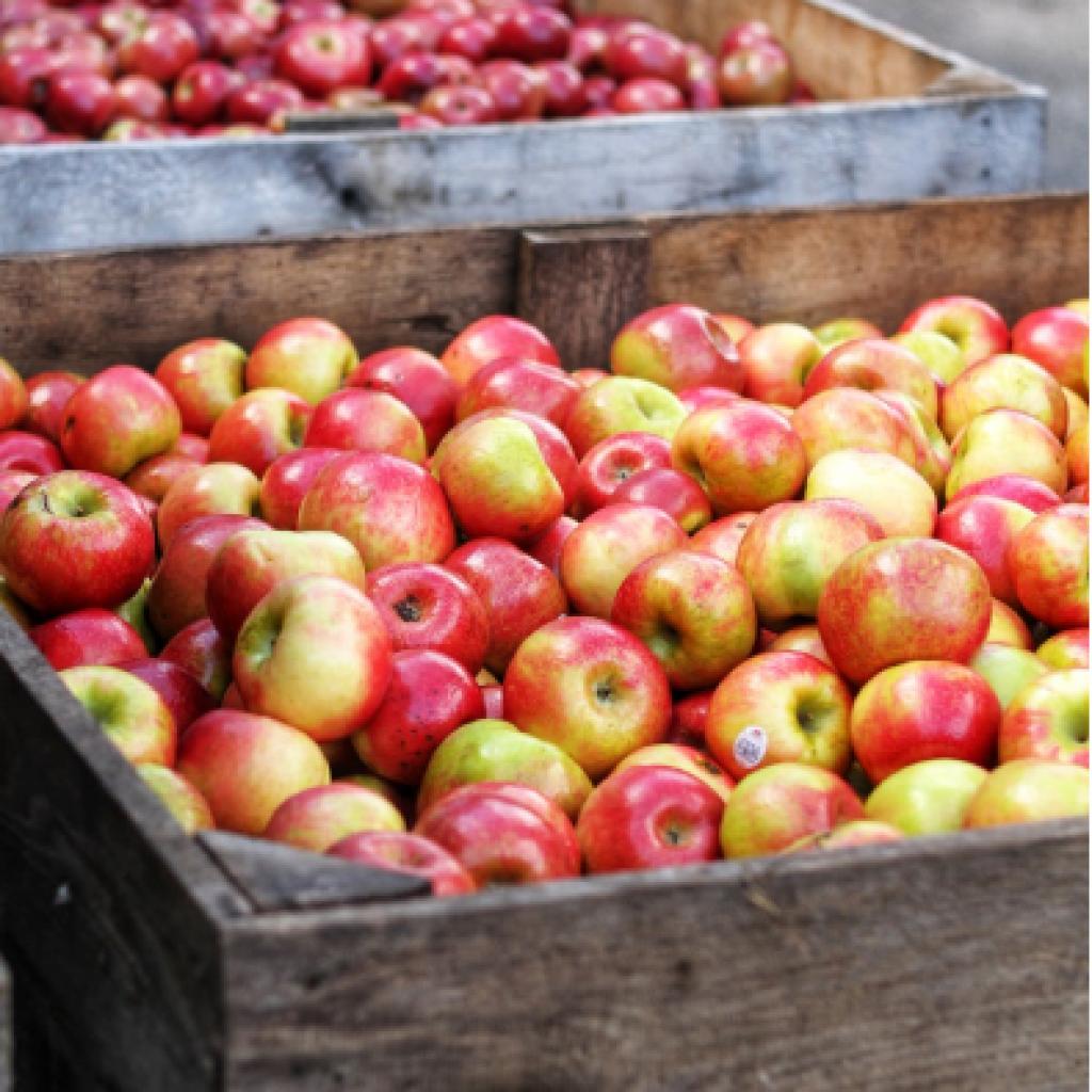 Яблуко від OVO