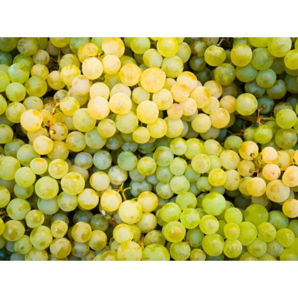 Виноград білий кишмиш від OVO