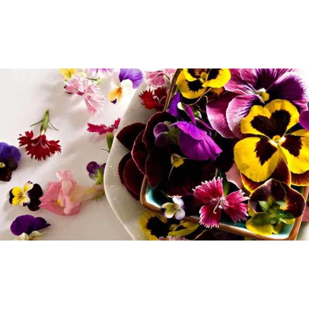 Мікрогрін квіти мікс 20-25шт від OVO